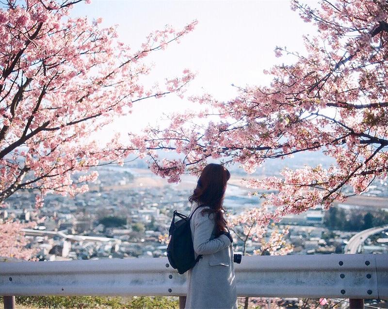今年、私は桜に出会えるのでしょうか……。